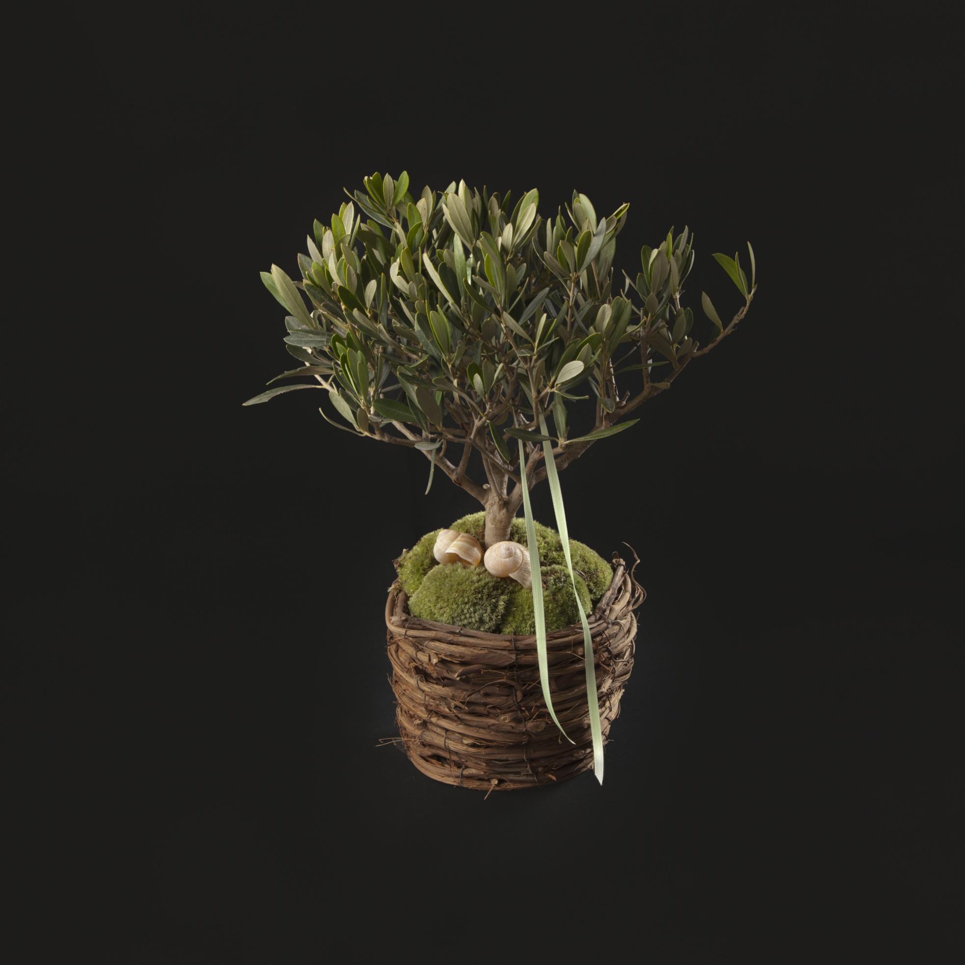 pflanzen begr nungen blumenqual ihr online shop. Black Bedroom Furniture Sets. Home Design Ideas